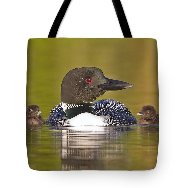 Loon With Two Chicks Tote Bag