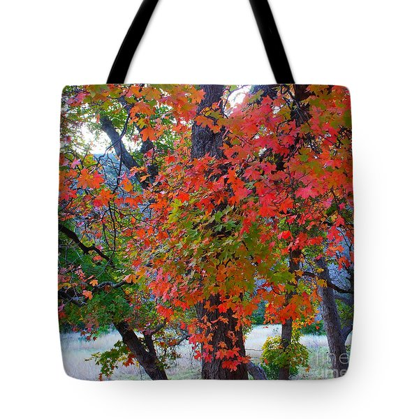 Lost Maples Fall Foliage Tote Bag