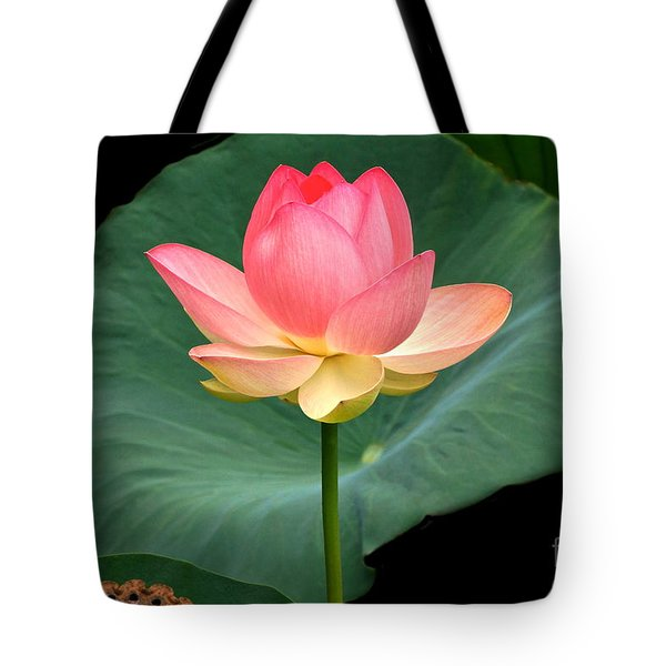 Lotus Of Late August Tote Bag