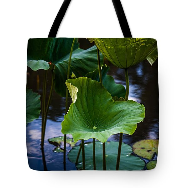 Lotuses In The Evening Light. Vertical Tote Bag by Jenny Rainbow
