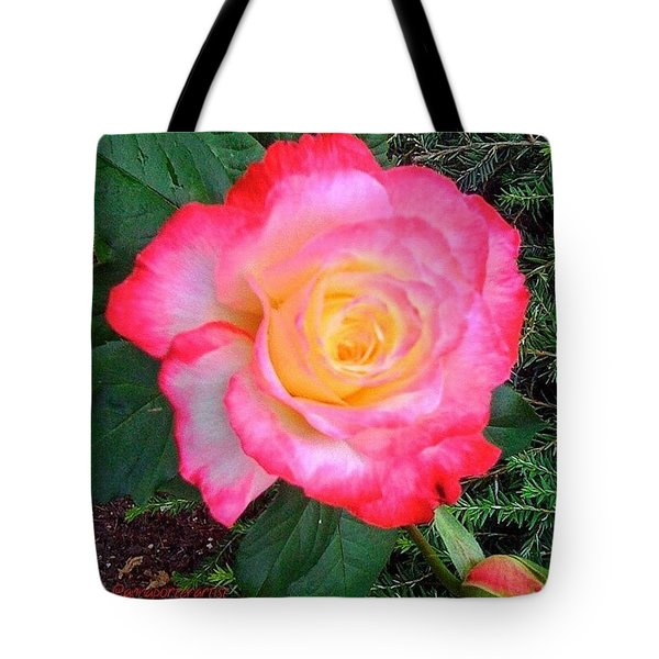 Love's First Blush - A Little Red And Tote Bag