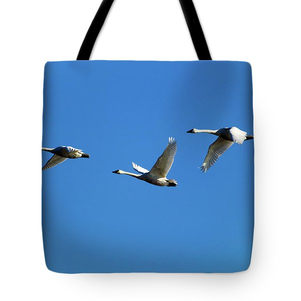 Low Angle View Of Tundra Swans Cygnus Tote Bag