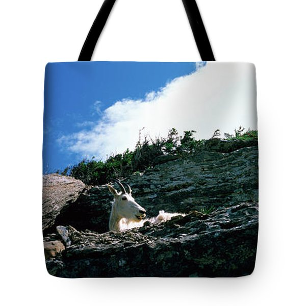Low Angle View Of Two Mountain Goats Tote Bag