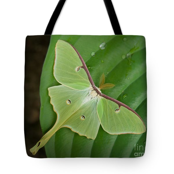 Tote Bag featuring the photograph Luna Moth by Alana Ranney
