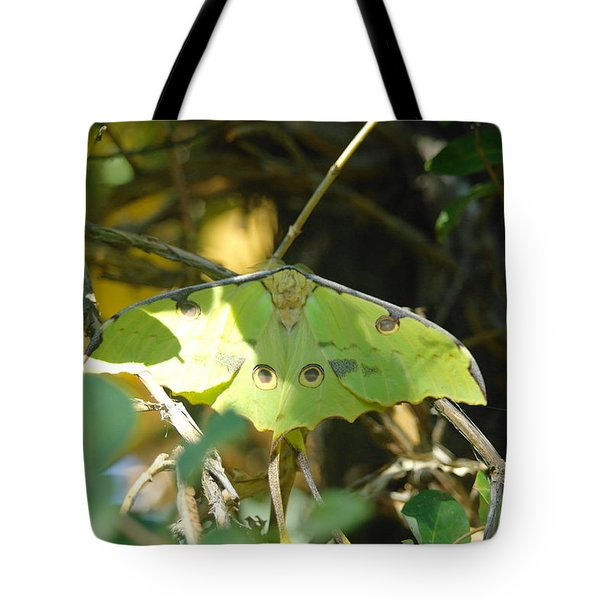 Luna Moth In The Sun Tote Bag by Jeff Swan