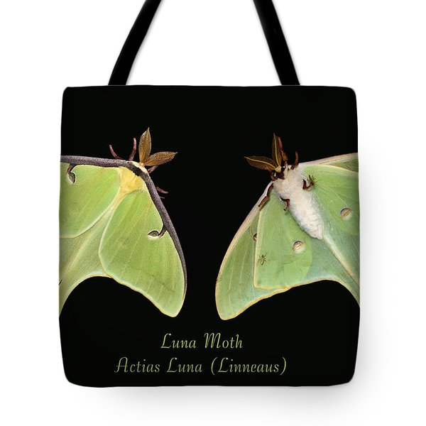Luna Moth Tote Bag by Kristin Elmquist