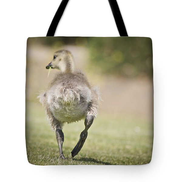 Lunch On The Run Tote Bag by Priya Ghose