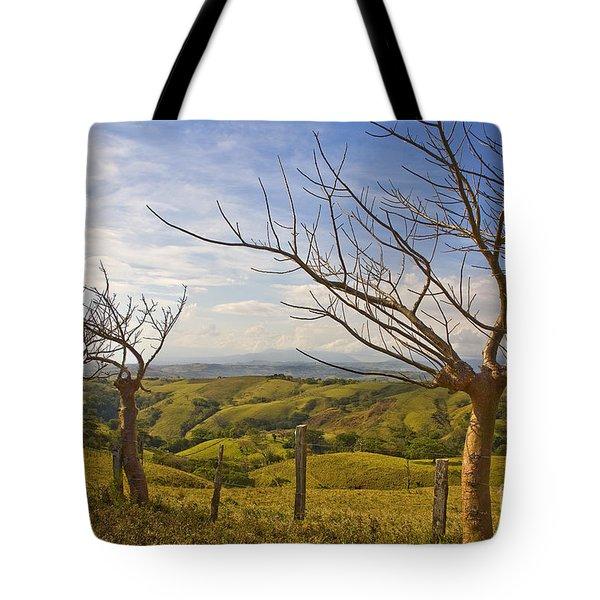 Lush Land Leafless Trees 2 Tote Bag