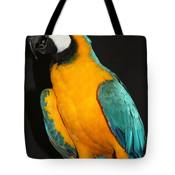 Macaw Hanging Out Tote Bag