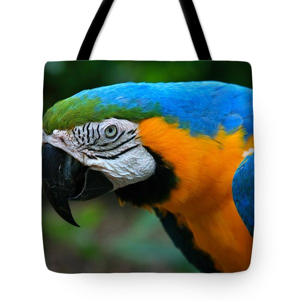 Macaw With Sweet Expression Tote Bag