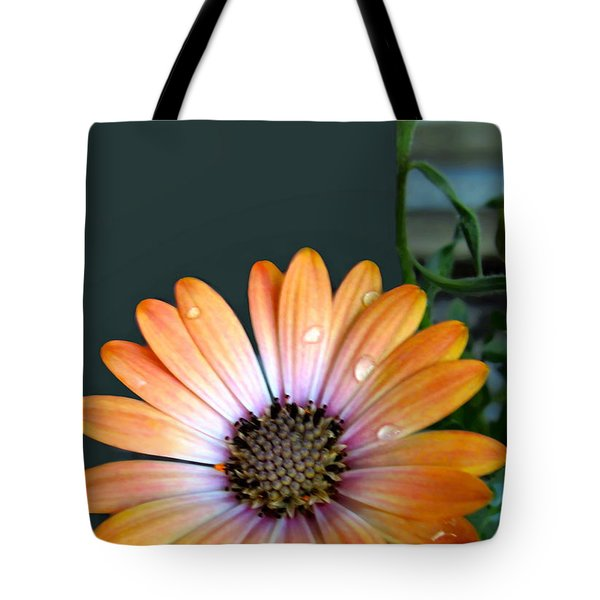 Macro Orange And Yellow Daisies With Water Droplets Tote Bag by Danielle  Parent
