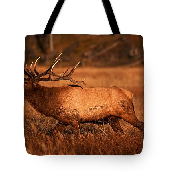 Madison Bull Tote Bag by Mark Kiver