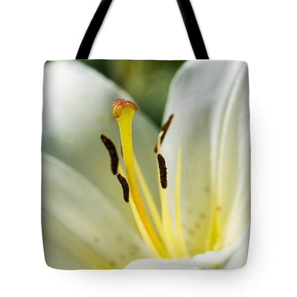 Madonna Lily - Featured 3 Tote Bag by Alexander Senin