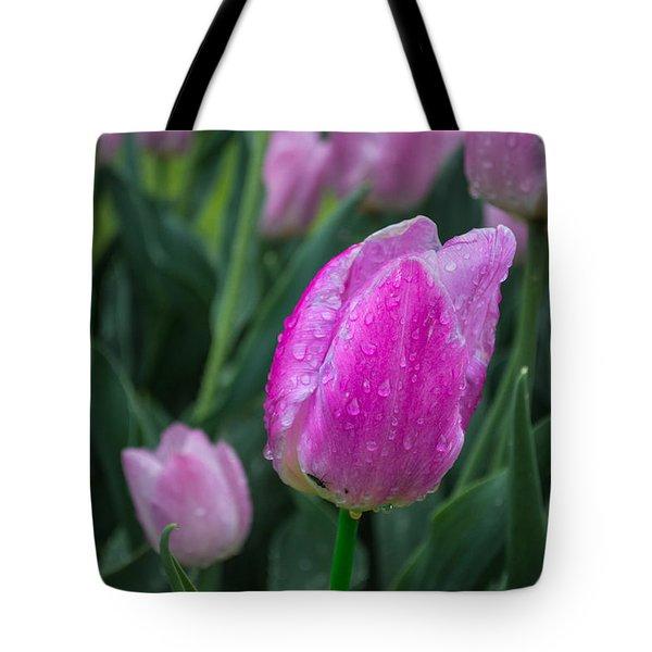 Magenta Tulip In Rain At Brandenburg Tote Bag