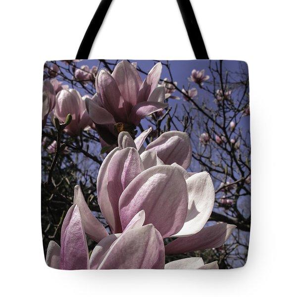 Magnificent Magnolia Tote Bag