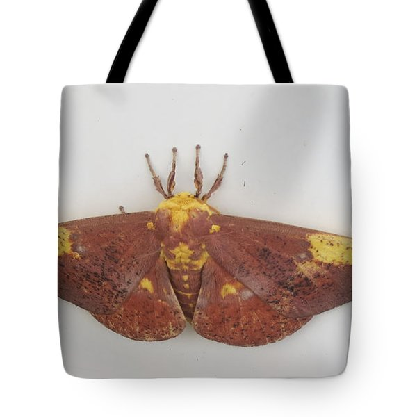 Magnificent Moth Tote Bag