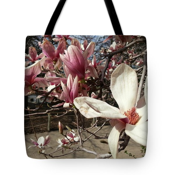 Tote Bag featuring the photograph Magnolia Branches by Caryl J Bohn