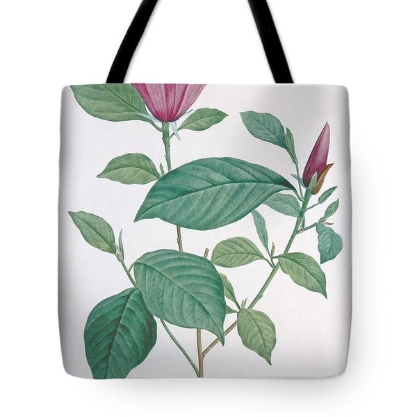 Magnolia Discolor Engraved By Legrand Painting By Henri