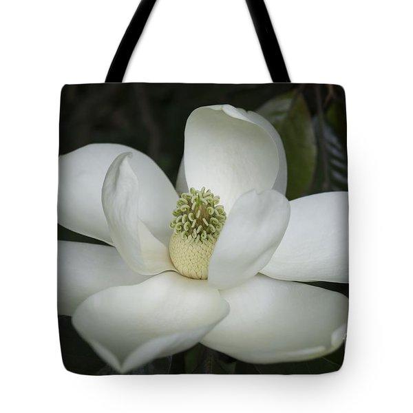 Magnolia Grandiflora Blossom - Simply Beautiful Tote Bag