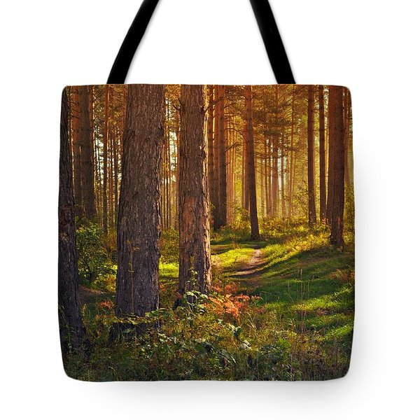 Maine Pine Forest Bathed In Light Tote Bag