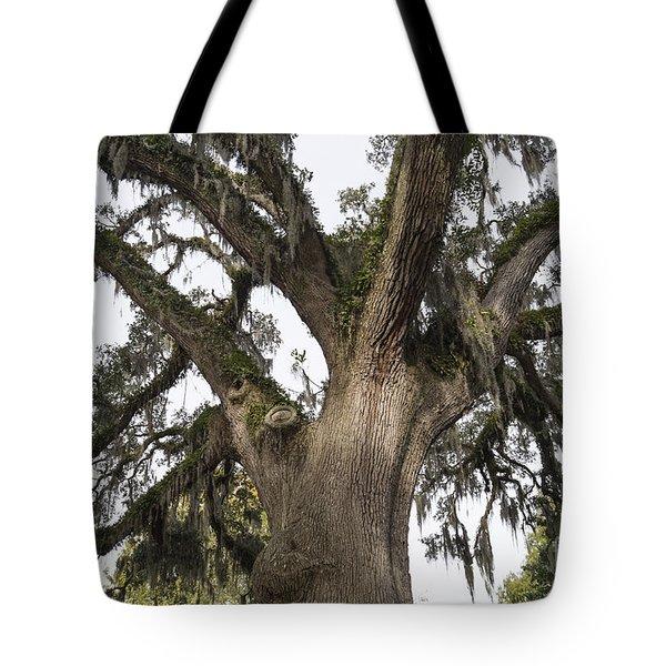 Majestic Live Oak Tree Tote Bag