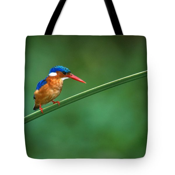 Malachite Kingfisher Tanzania Africa Tote Bag by Panoramic Images