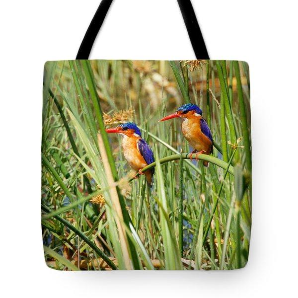 Malachite Kingfishers Tote Bag