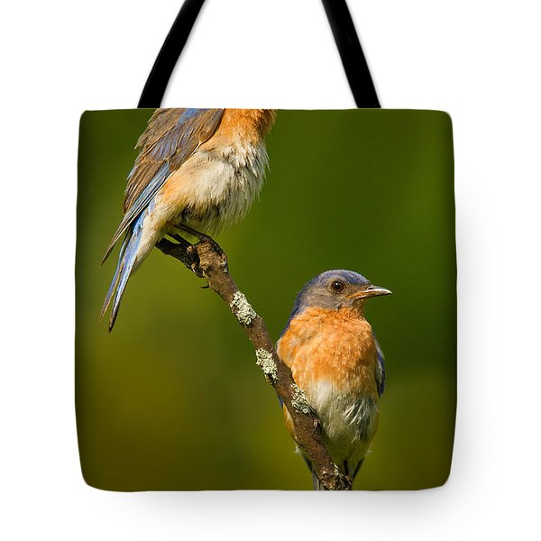 Tote Bag featuring the photograph Male And Female Bluebirds by Jerry Fornarotto