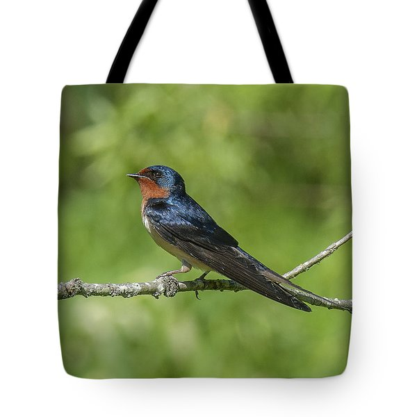 Male Barn Swallow Hirundo Rustica Dsb262 Tote Bag