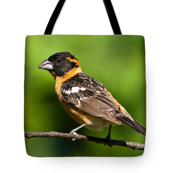 Male Black Headed Grosbeak In A Tree Tote Bag