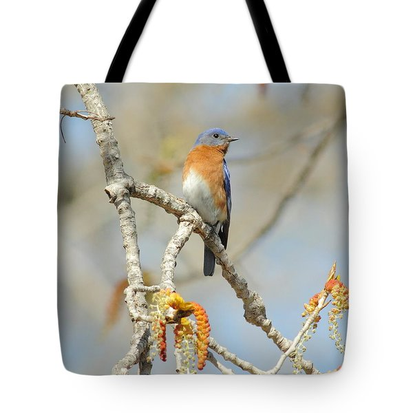 Male Bluebird In Budding Tree Tote Bag by Robert Frederick