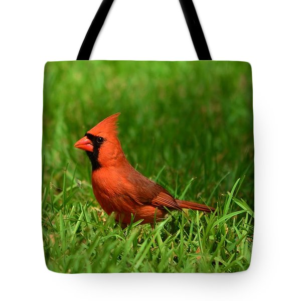 Tote Bag featuring the photograph Male Cardinal by Bob Sample