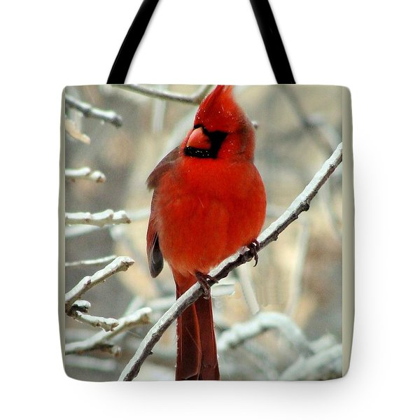 Tote Bag featuring the photograph Male Cardinal  by Janette Boyd