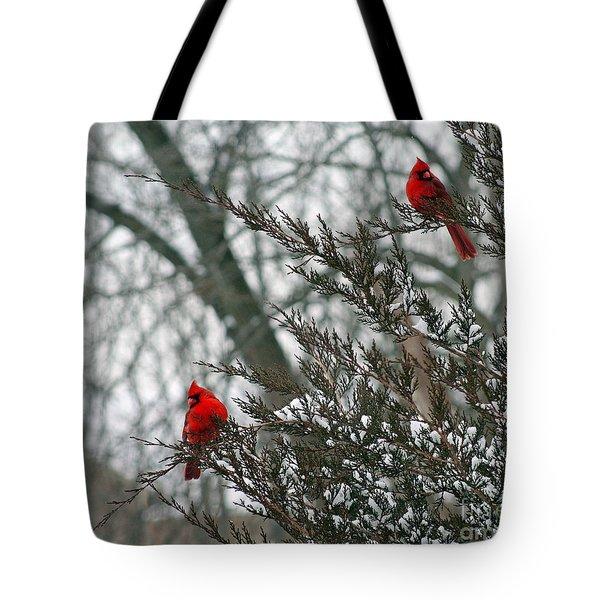 Male Cardinal Pair Tote Bag