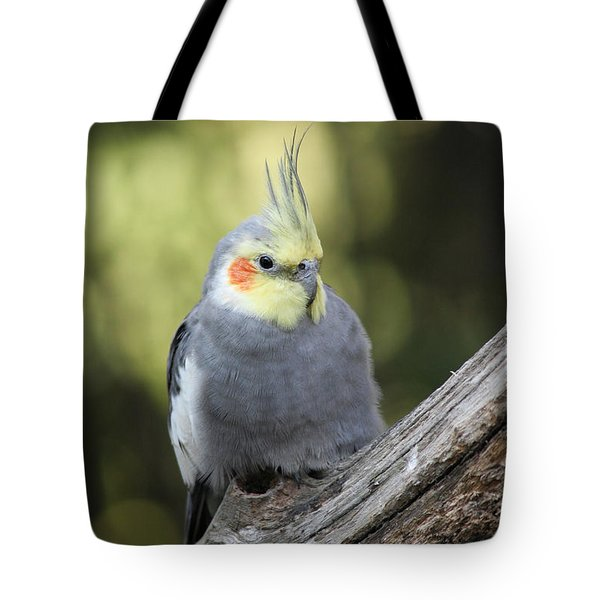 Tote Bag featuring the photograph Male Cockatiel by Judy Whitton