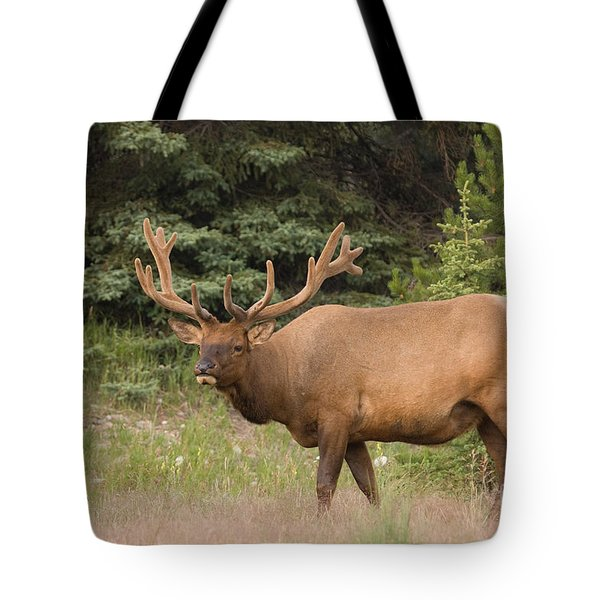 Tote Bag featuring the photograph Male Elk In Velvet by Chris Scroggins