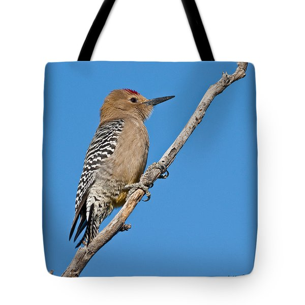 Male Gila Woodpecker Tote Bag