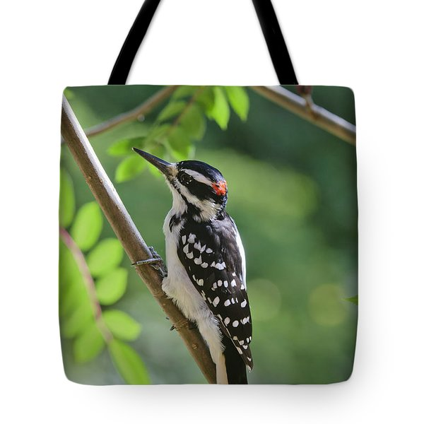 Male Hairy Woodpecker Picoides Villosus Tote Bag by Kenneth Whitten