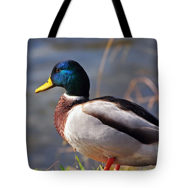 Male Mallard Duck Tote Bag