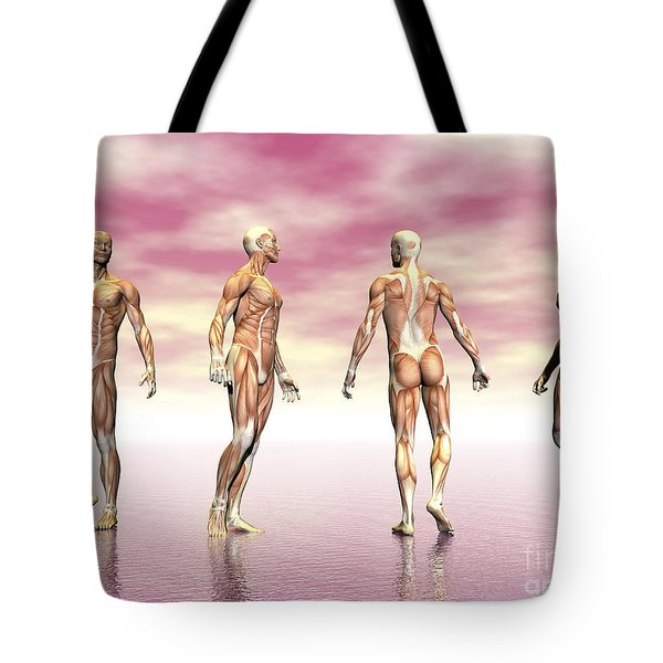 Male Muscular System From Four Points Tote Bag by Elena Duvernay