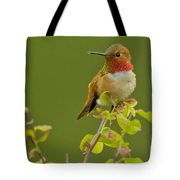 Male Rufous Hummingbird Tote Bag by Tom and Pat Leeson