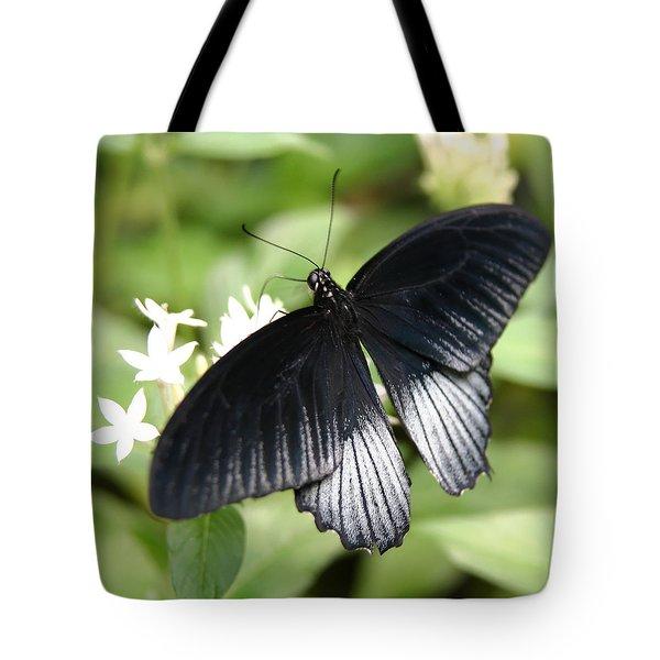 Male Scarlet Swallowtail Tote Bag