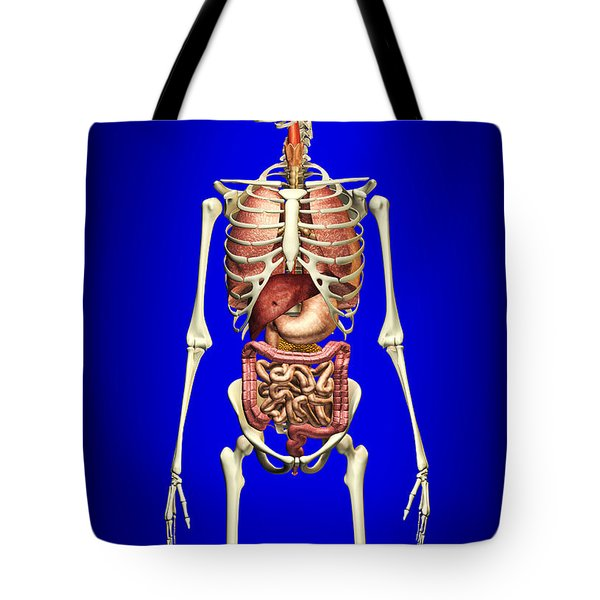 Male Skeleton With Internal Organs Tote Bag by Leonello Calvetti