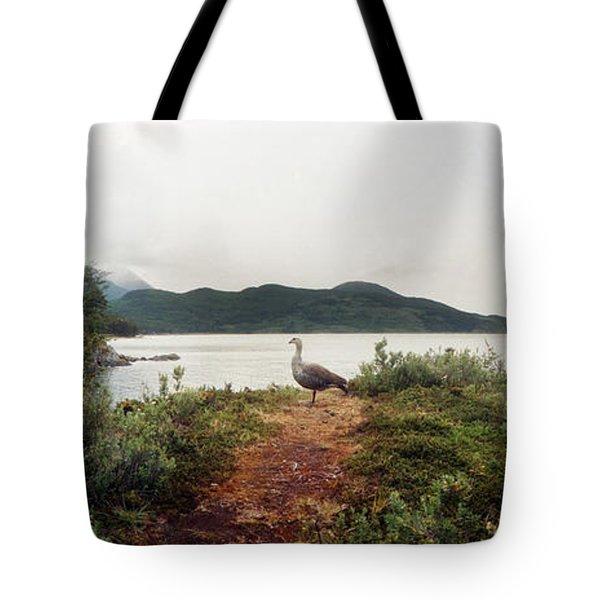Male Upland Goose Or Magellan Goose Tote Bag
