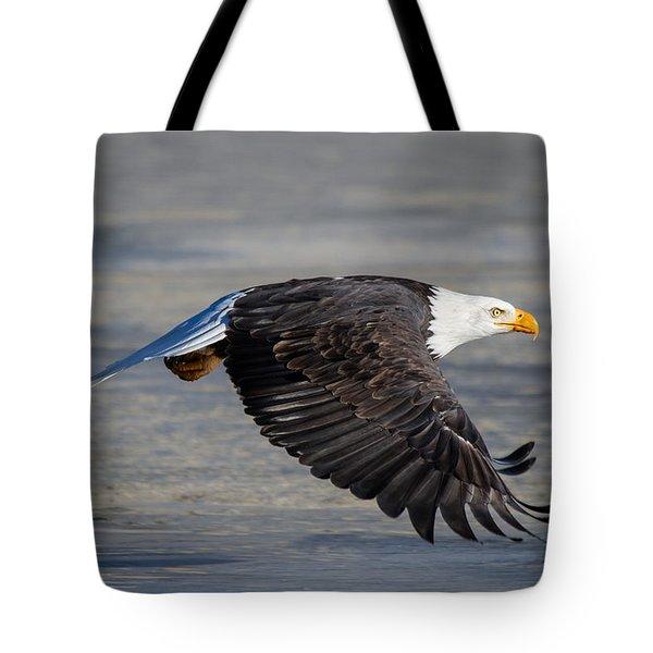 Male Wild Bald Eagle Ready To Land Tote Bag by Eti Reid