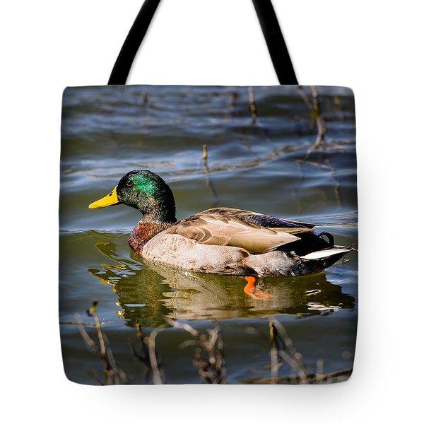 Mallard In Pond Tote Bag