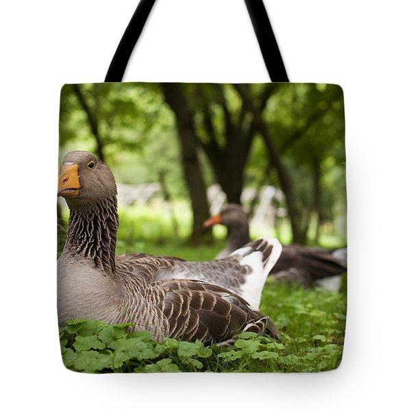 Mama Goose Tote Bag