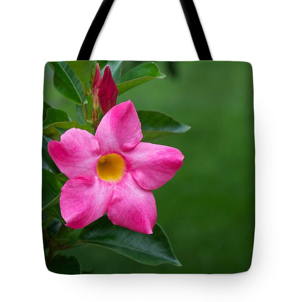 Tote Bag featuring the photograph Mandevilla by Nature and Wildlife Photography