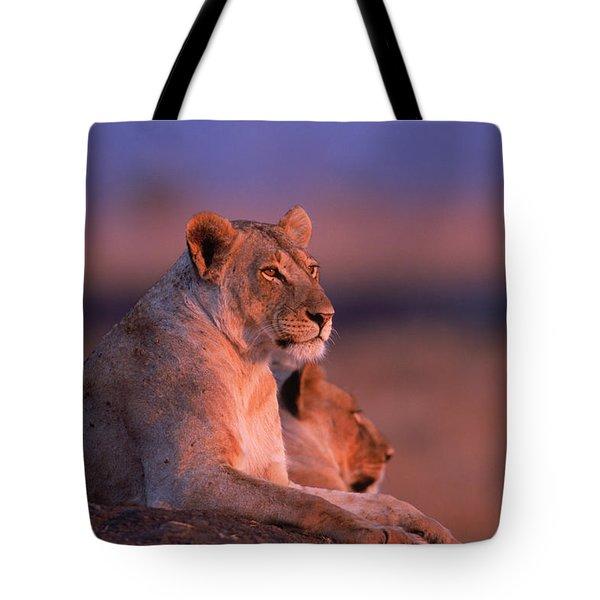 Maneless Lions In Kenya Tote Bag