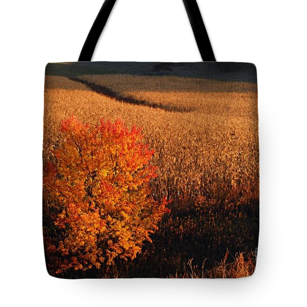 Maple And Cornfield At Dawn Tote Bag by Larry Ricker